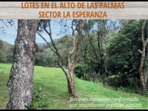 VENTA DE LOTE ENVIGADO-ALTO DE PALMAS-SECTOR LA ESPERAN...