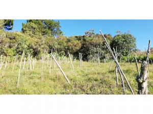 Lotes en Guarne Antioquia